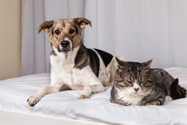 Pets, Dog, Cat